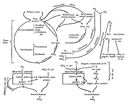 gallery for  u0026gt  potassium cycle in soil